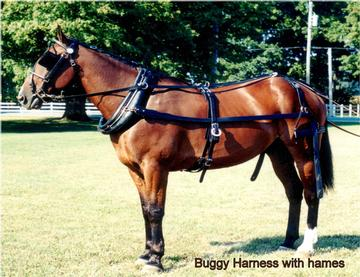 Buggy Harness edited horse driving harness data wiring diagram
