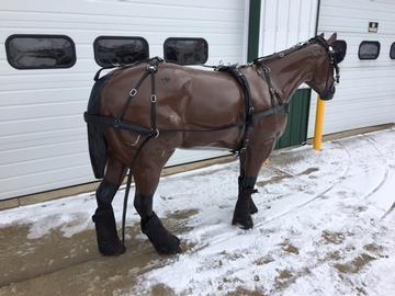 Light Horse Driving Harness with Collar - Shipshewana Harness ...