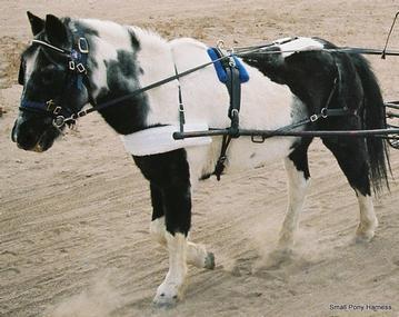 Pony Harness with Collar - Bio Plastic - Shipshewana Harness ...