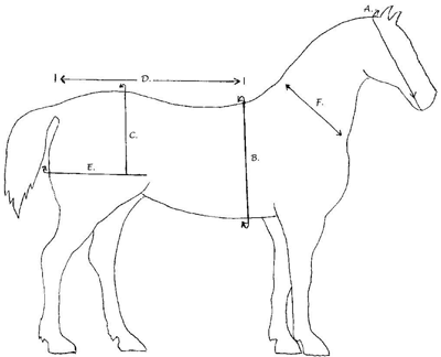 Horse Picture for Measurement Harness